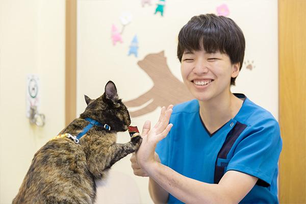 もみの木動物病院はみんな猫好き!