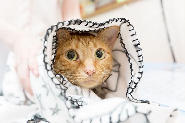 怖がりのネコちゃんでも安心な環境!